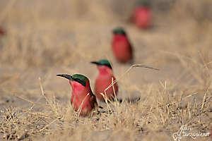 Une balade sur le Zambèze, Namibie