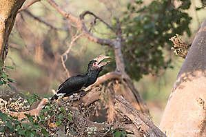 Kruger NP, AFS