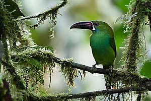 Mes oiseaux d'Équateur