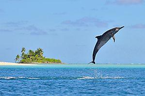L'île paradisiaque - Chagos