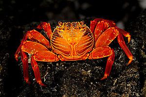 Crabocolor