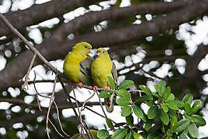 Deux petits pigeons...