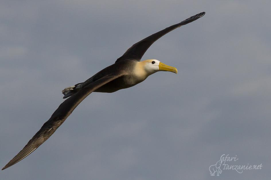 cat-albatrosgalapagos-7841.jpg