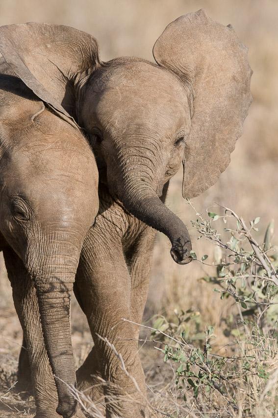 jeu_elephant_samburu-0127.jpg