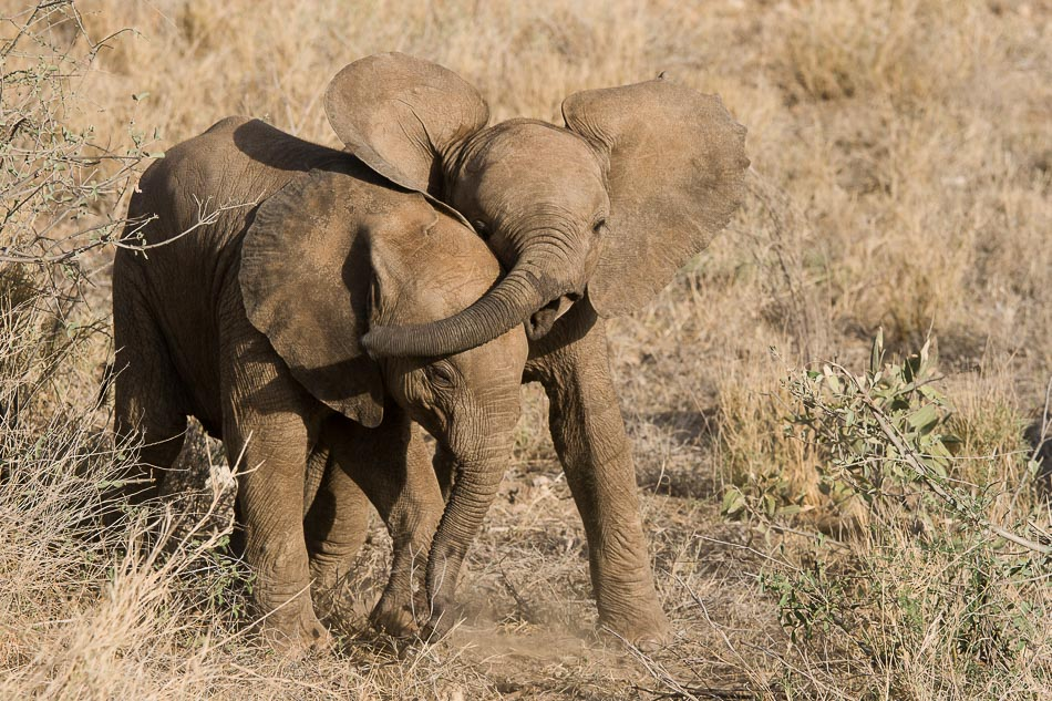 jeu_elephant_samburu-6690.jpg