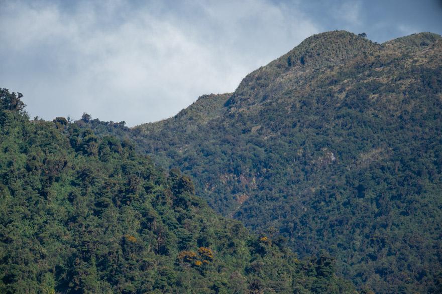 Guango-2.jpg