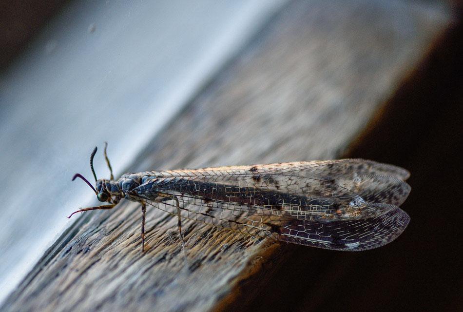 Insecte-5991.jpg