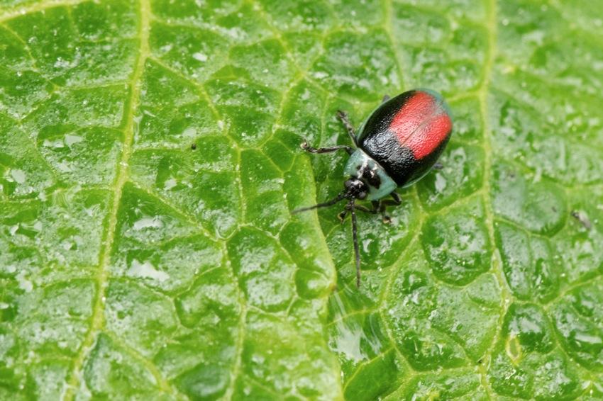 Insecte1.jpg