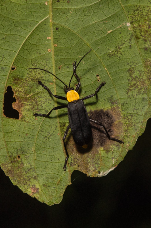 Insecte2-5338.jpg