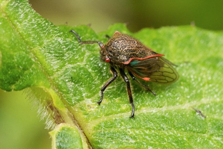 Insecte2.jpg