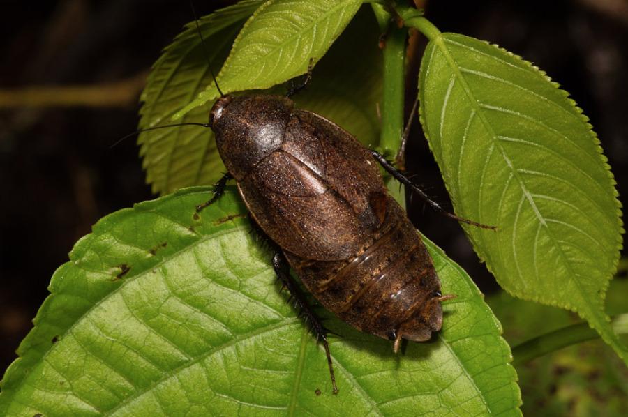 Insecte3-5342.jpg
