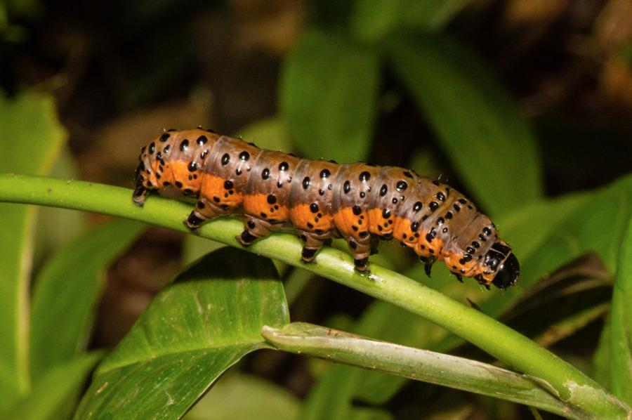 Insecte5-5347.jpg
