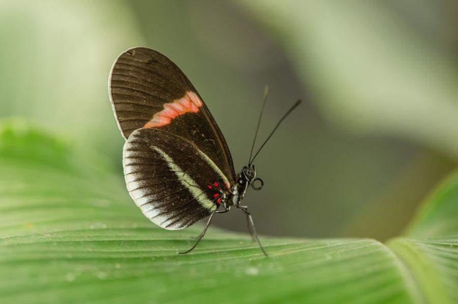 Papillon2-5644.jpg