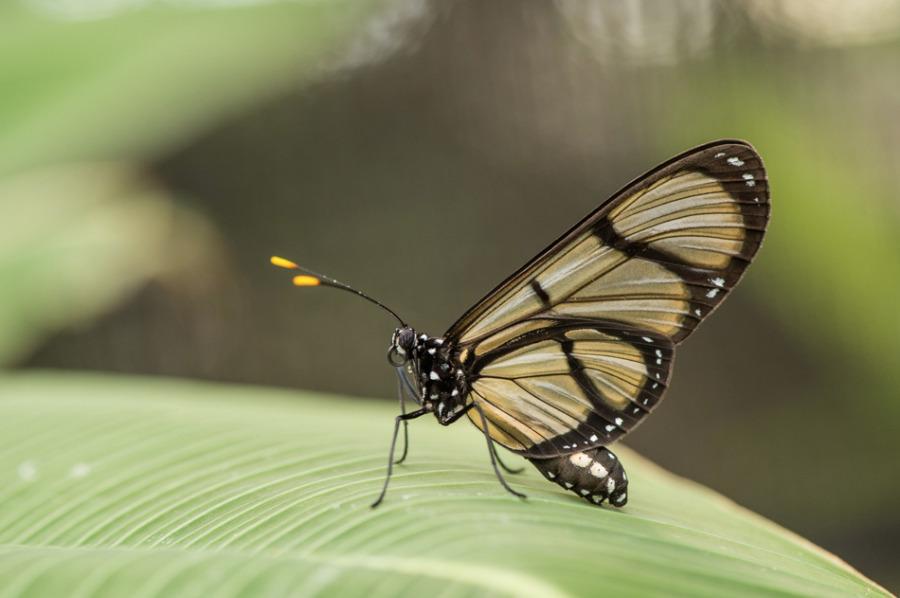 Papillon3-5648.jpg