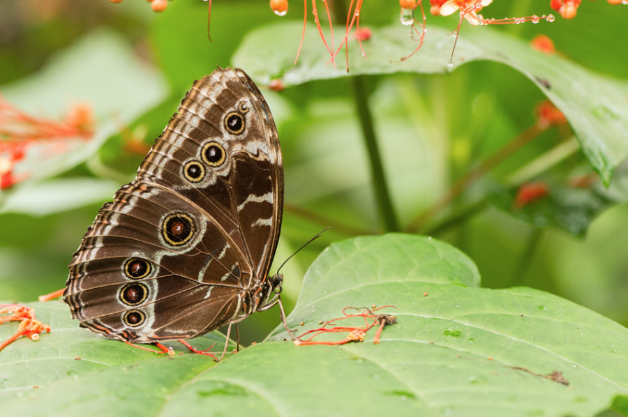 Papillon5-5652.jpg
