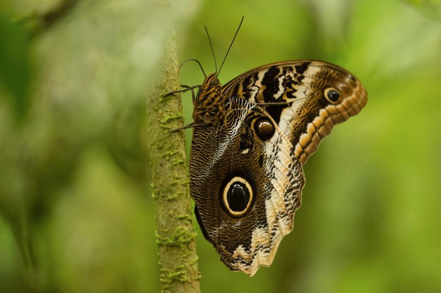 Papillons1-5405.jpg