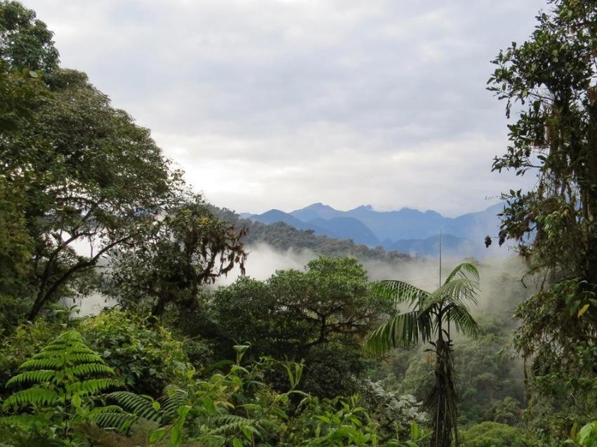 bellavista-cloud-forest-3.jpg