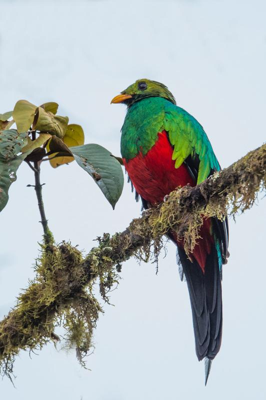 quetzal2-8674.jpg