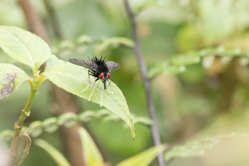 insecte3.jpg