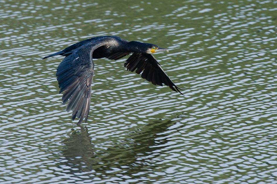 paul-cormoran.jpg