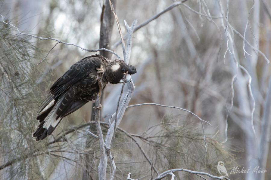 Australie-083.jpg
